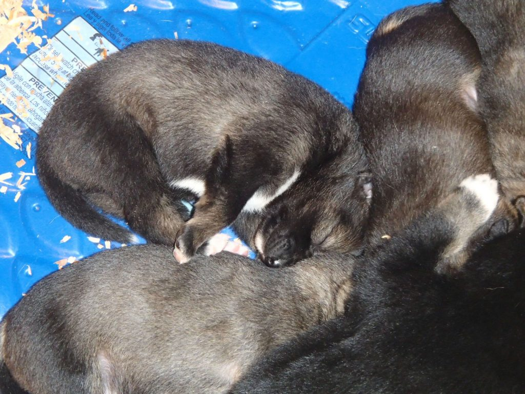 What Do Puppies Dream Will Birds Learn To Trust Me Dew Claw Kennel